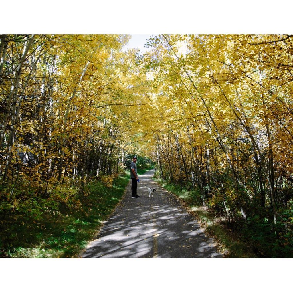 yyc yycliving autumn